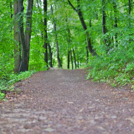 green path+, Nikon DF, AF-S Nikkor 50mm f/1.8G
