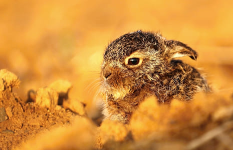 Adorable baby hare in field