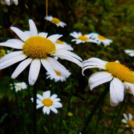 White flowe, Nikon COOLPIX S6900