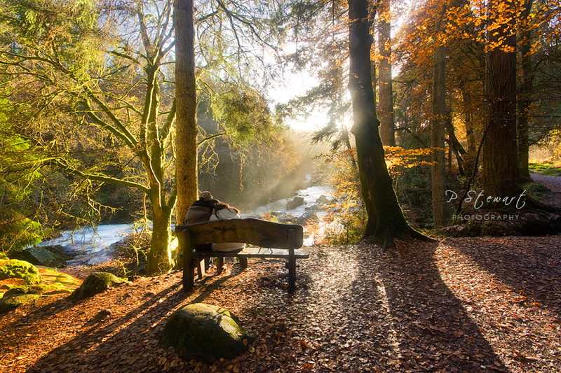Photograph Autumn Retreat by Philip Stewart on 500px
