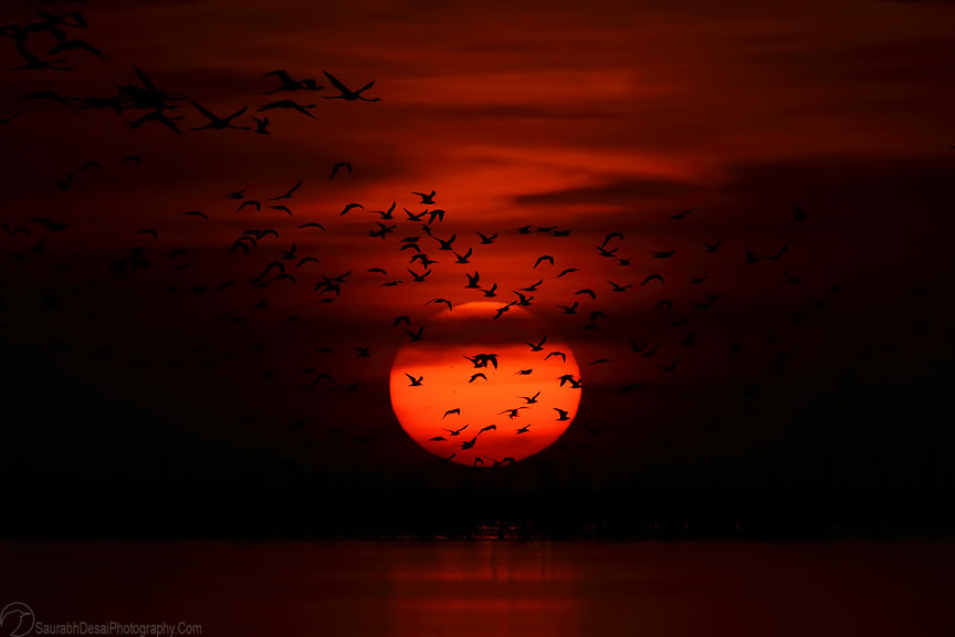 Photograph Birds of Gujarat by Saurabh Desai on 500px