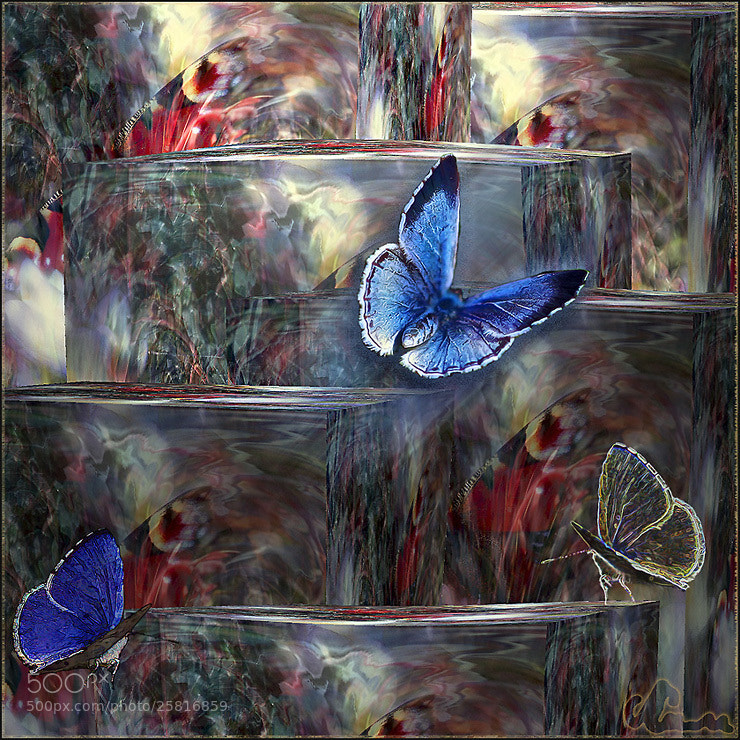 Photograph About butterfly... by Alla  Lora on 500px