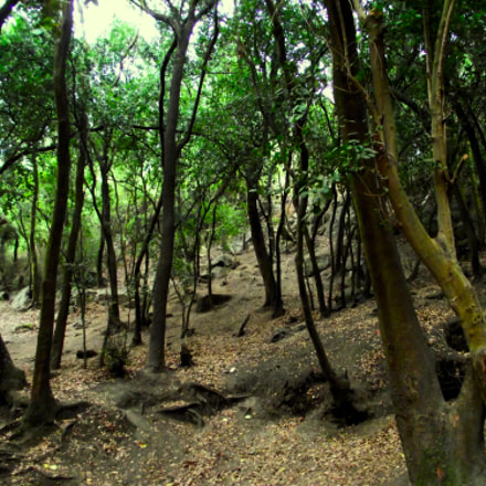 Bosque en otoño, Fujifilm FinePix S2500HD