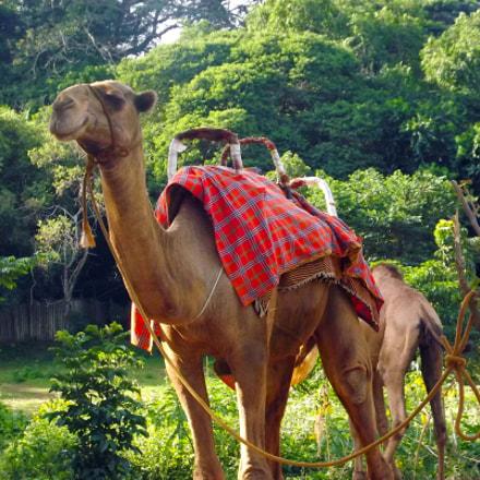 camel, Fujifilm FinePix S4000