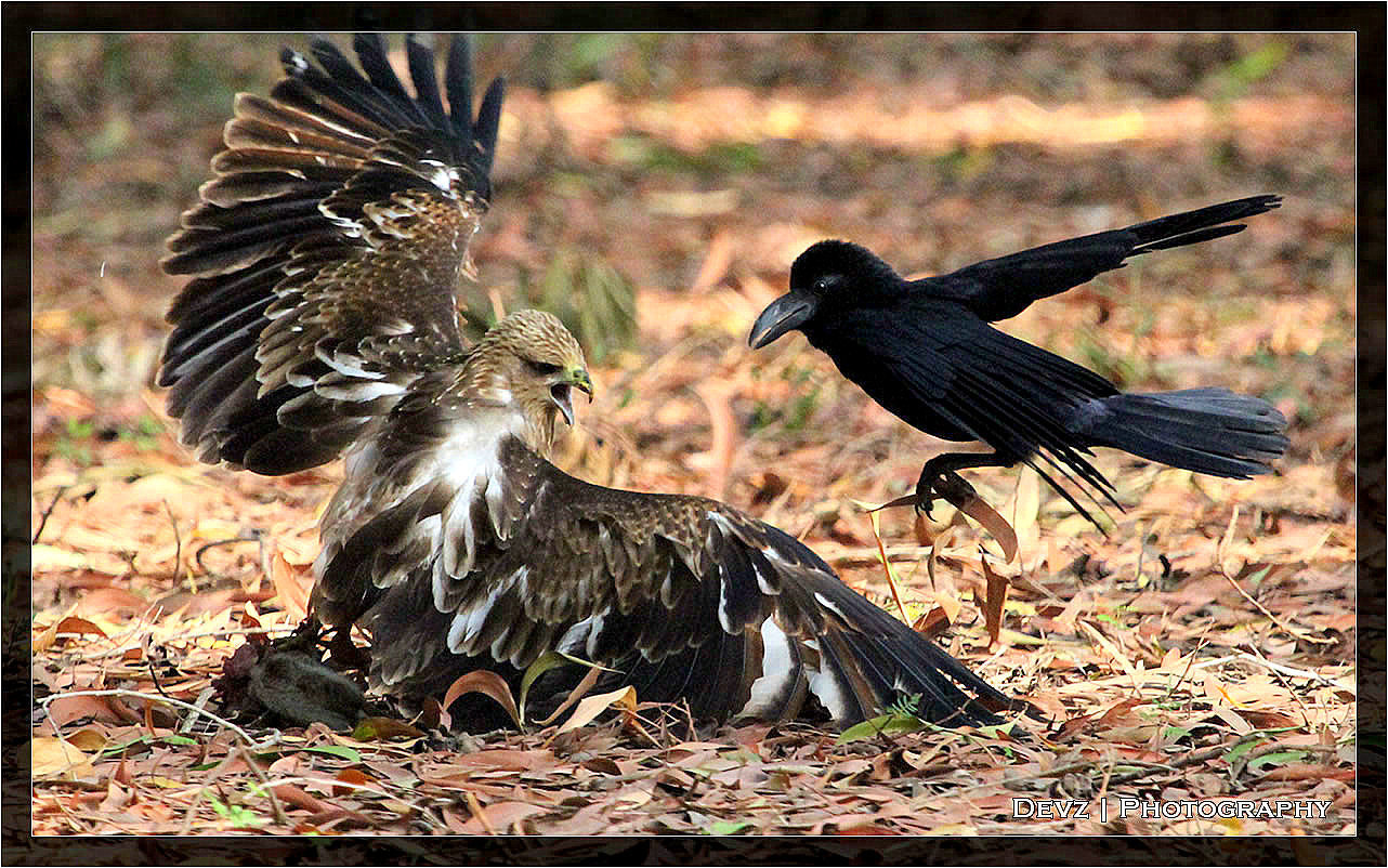 Photograph Let the fight begin.. by Dev Panda on 500px