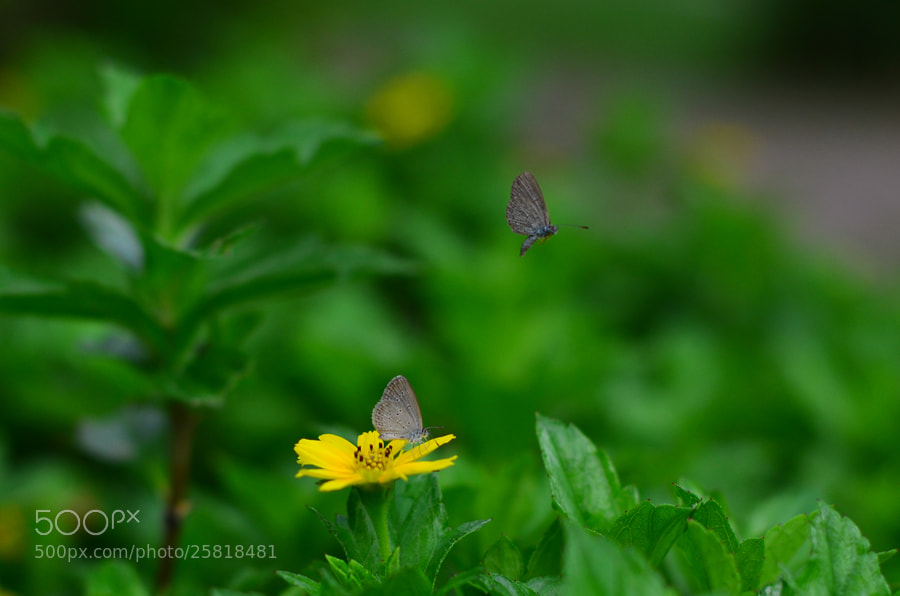 Photograph Butterfly n Flower by Khoo Boo Chuan on 500px