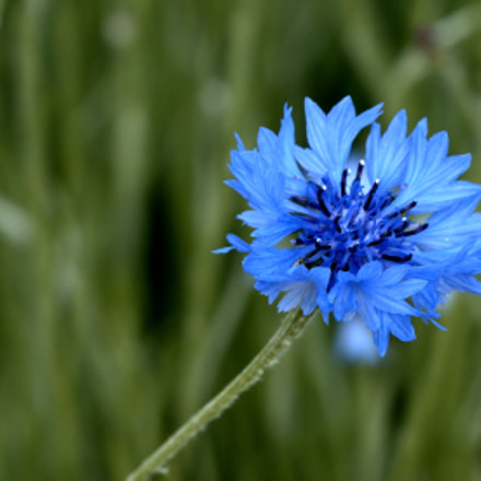 Blue by you....., Canon EOS 70D