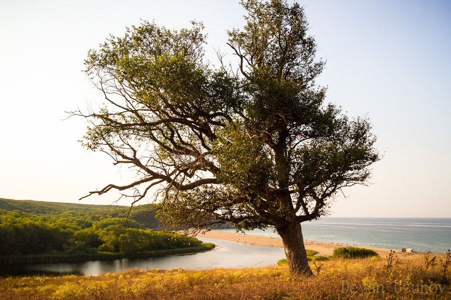 Photograph Tree on The Shore by Deyan Uzunov on 500px