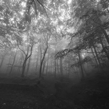 TheOldForest, Nikon D7200