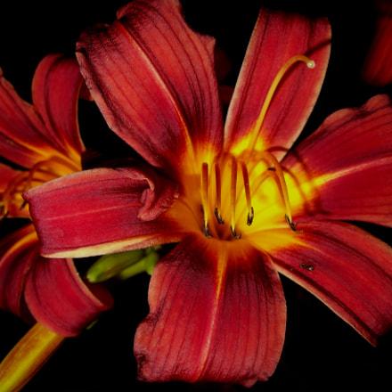 Lily, Sony DSC-W370