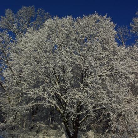 Snow Covered Tree, Pentax K20D, smc PENTAX-DA L 18-55mm F3.5-5.6