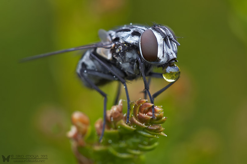 Photograph Fly bubble by Siro Moya on 500px