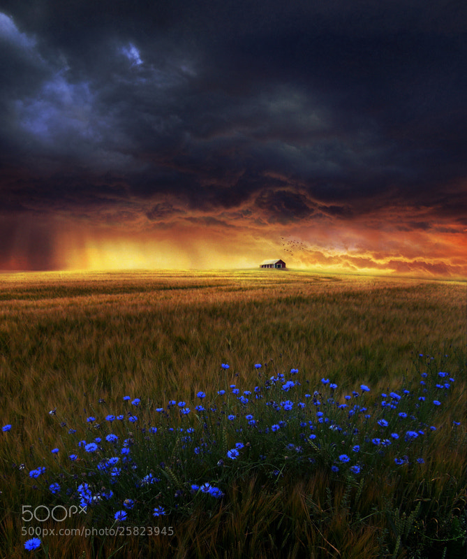 Photograph dream field by Barbara Florczyk on 500px