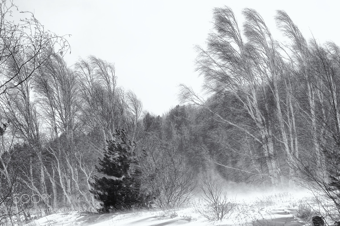 Photograph the snow storm by Salvo Mangiaglia on 500px