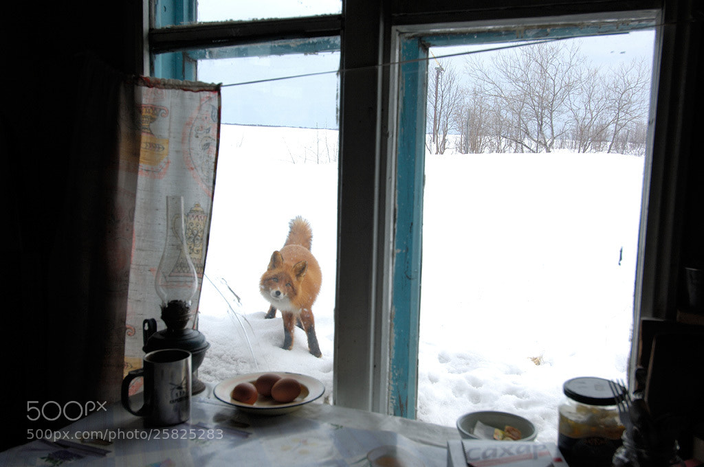 Photograph Could I come in?:) by Igor Shpilenok on 500px