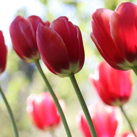 Spring, Canon EOS 200D