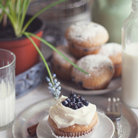 muffins with blueberry by Yulia Pletinka (podsolunuh)) on 500px.com