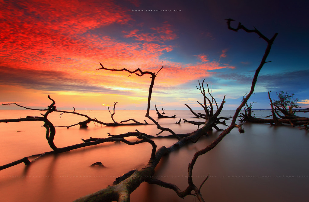 Photograph Skeleton of Dead Trees by Fakrul Jamil on 500px