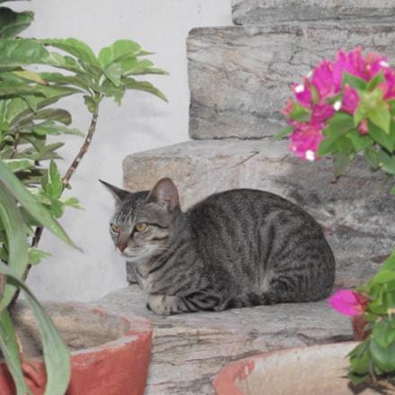 Moody Cat, Fujifilm FinePix S1800