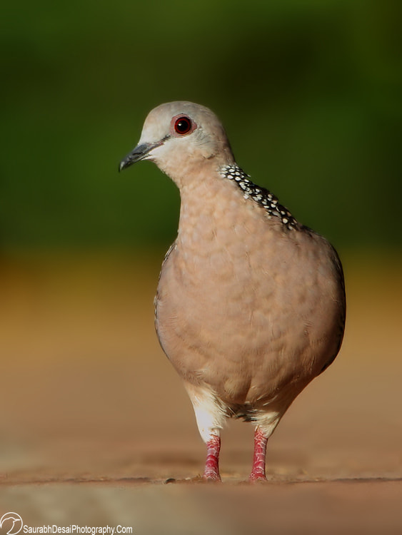 Photograph Dove Walk by Saurabh Desai on 500px