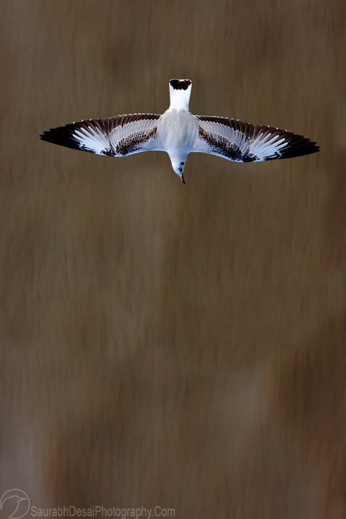Photograph Areal View of Bird in Flight by Saurabh Desai on 500px
