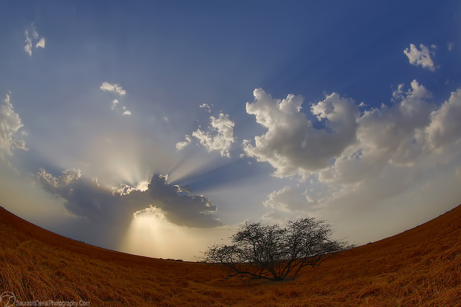 Photograph Grassland-scape from Gujarat by Saurabh Desai on 500px