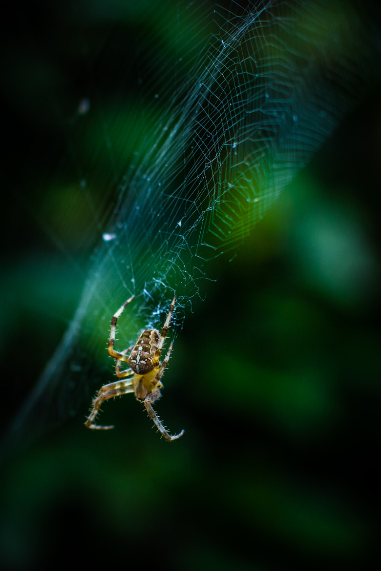 Photograph Spider by Marcin Roszko on 500px