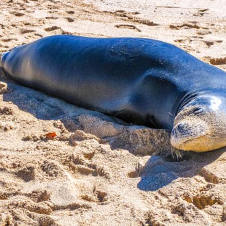 hawaiian Seal, Canon DIGITAL IXUS 970 IS
