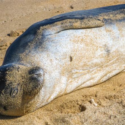 Seal lying, Canon DIGITAL IXUS 970 IS