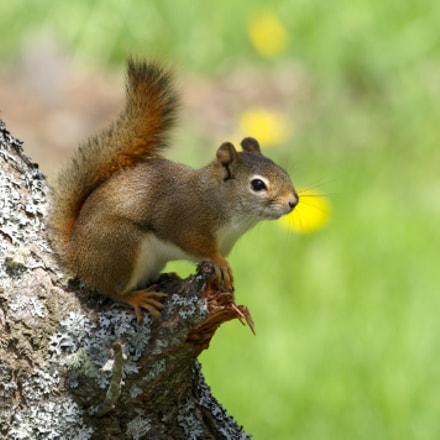 Junior Squirrel, RICOH PENTAX KP