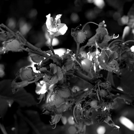 The intricacies of spring, Canon EOS 40D, Canon EF 35-80mm f/4-5.6