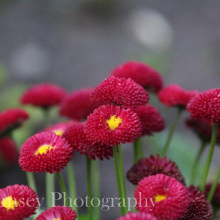 Flowers in Lichfield, Canon EOS 700D