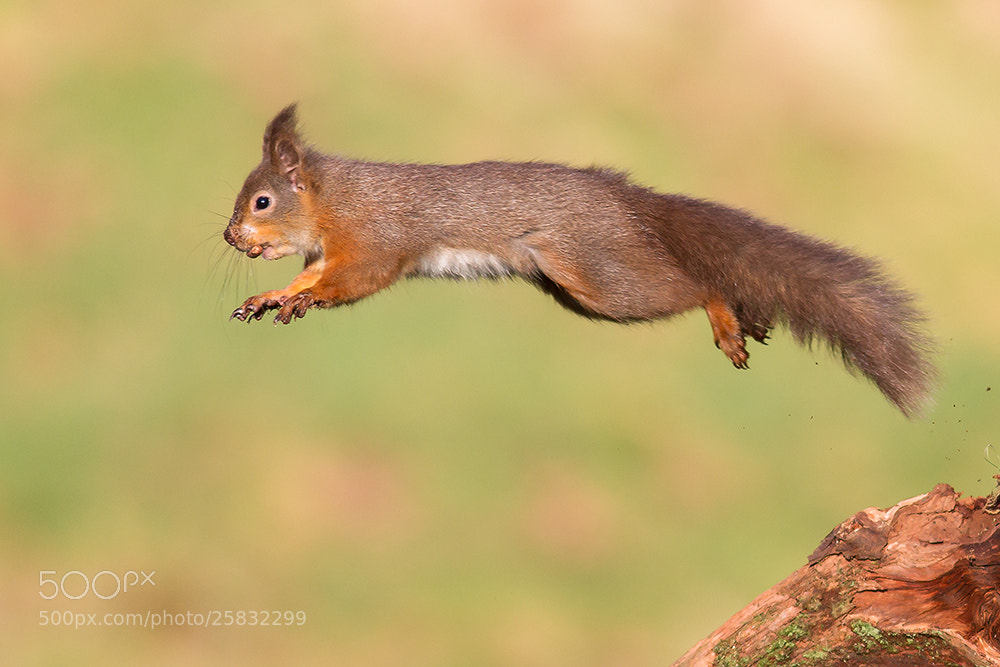 Photograph Leap of Faith by Mark Medcalf on 500px