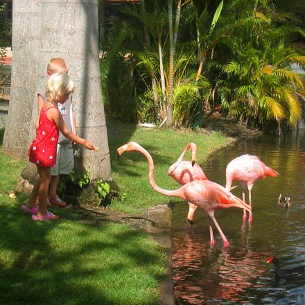 Feeding the flamingoes, Canon POWERSHOT S230