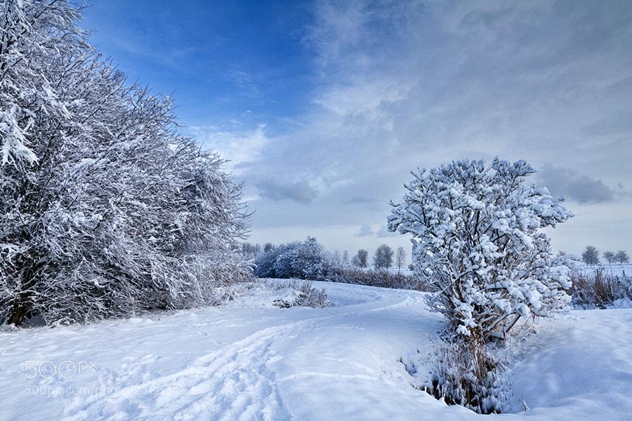 Photograph Still Winter... by Deen Guldemond on 500px