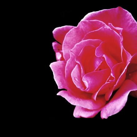 Minimal pink, Nikon D7200, AF Zoom-Nikkor 28-80mm f/3.3-5.6G