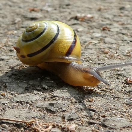 Snail, Panasonic DMC-TZ81