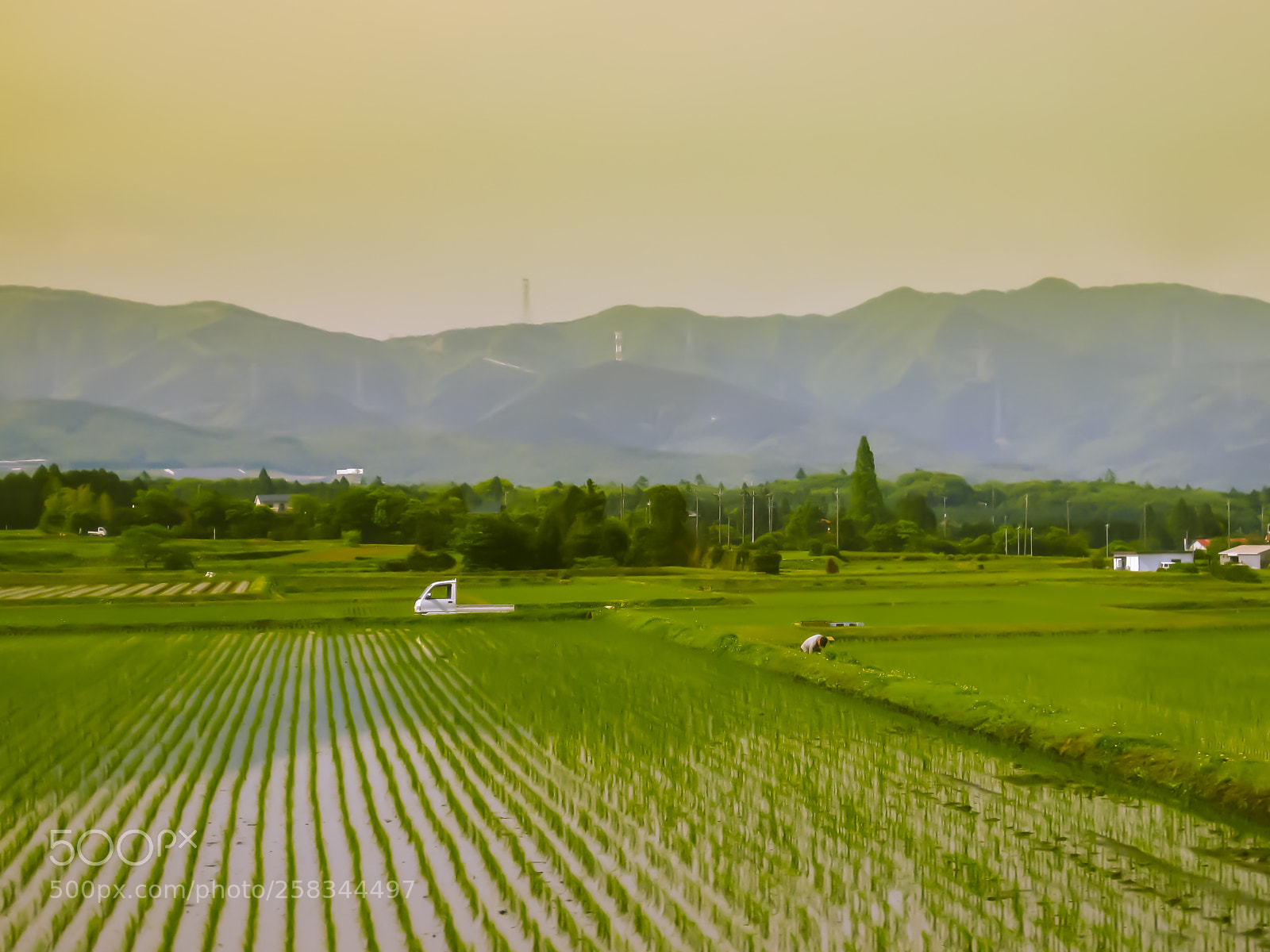 Japanese Rice Paddy, Canon POWERSHOT SD770 IS