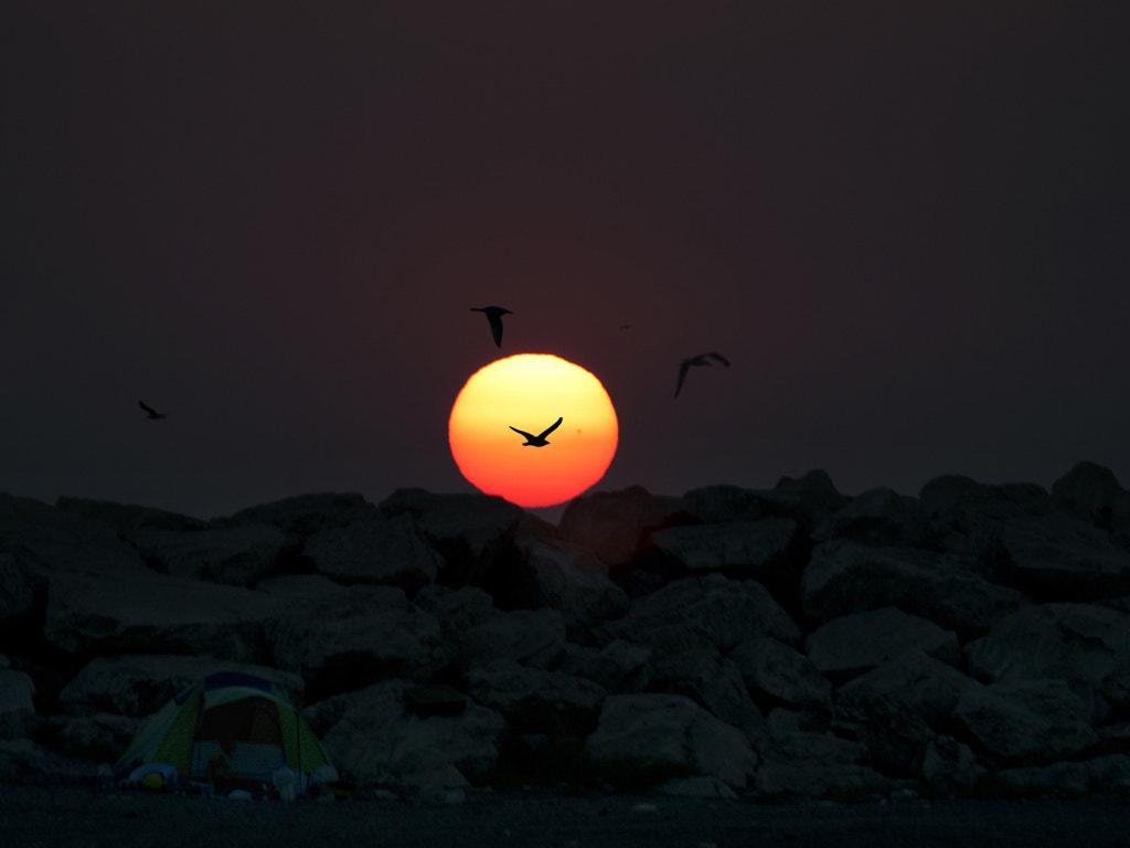 Photograph Seagulls and Sunset by MURAT FINDIK on 500px