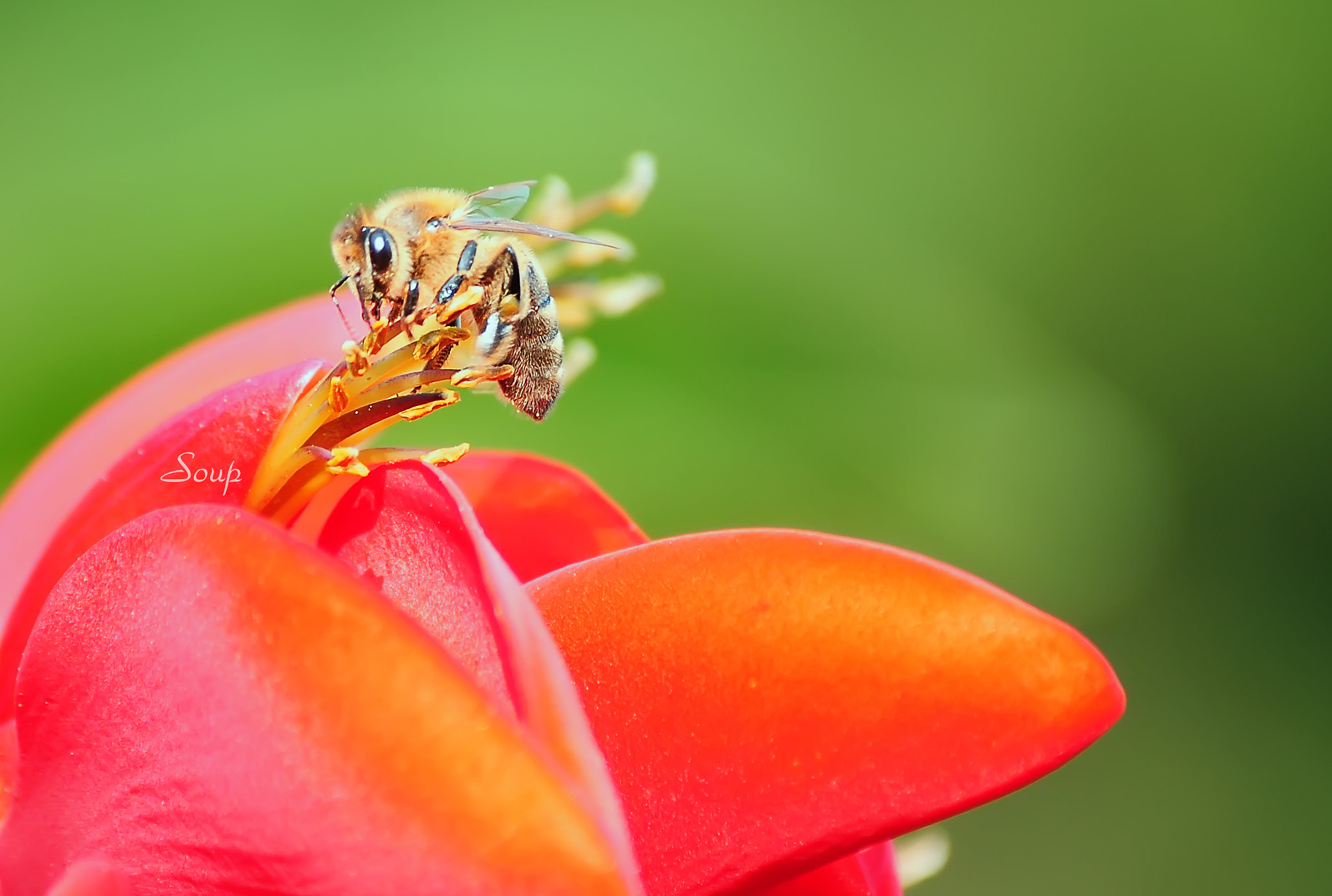 Photograph bee and flower by Pham Huu Binh on 500px