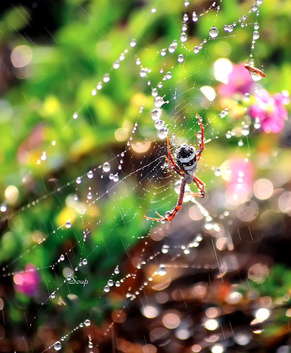 Photograph spider by Pham Huu Binh on 500px