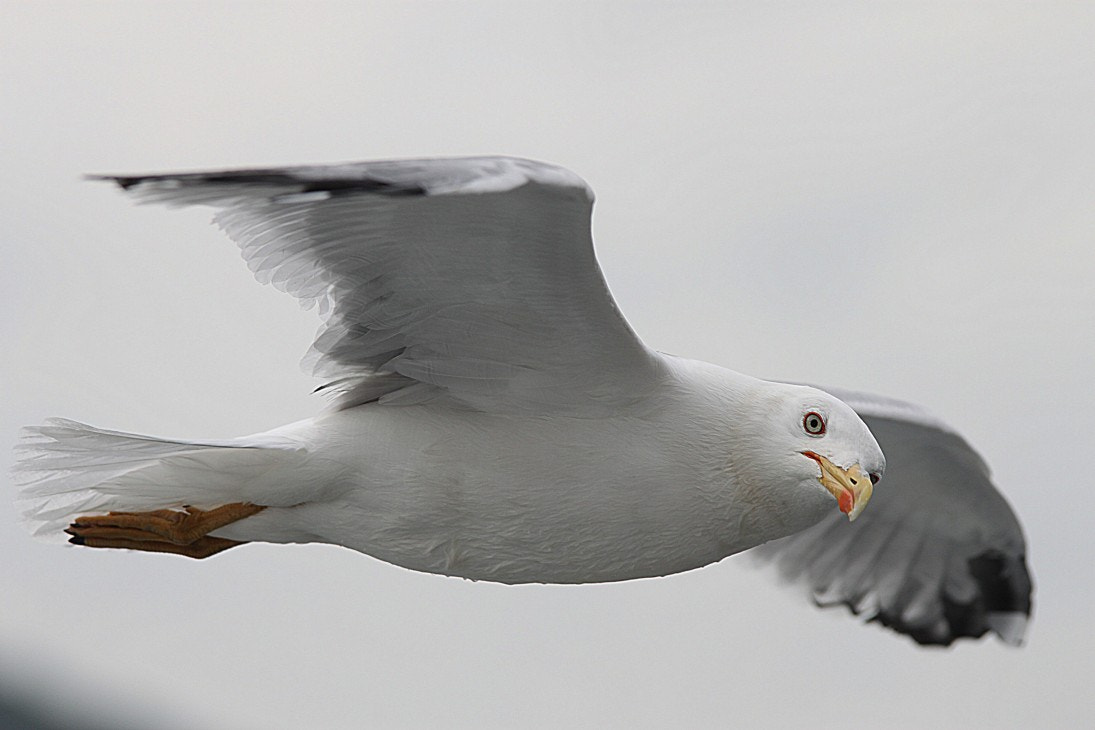 Photograph Seagull by Burak  on 500px