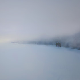 Winter by Ljubinka Lepojevic (LJL11)) on 500px.com