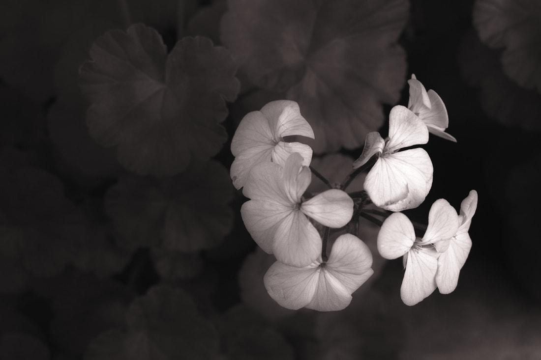 Photograph white flowers by Nobuo Furuhashi on 500px