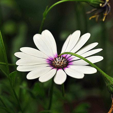 flower, Nikon D700, Sigma APO Macro 150mm F2.8 EX DG HSM