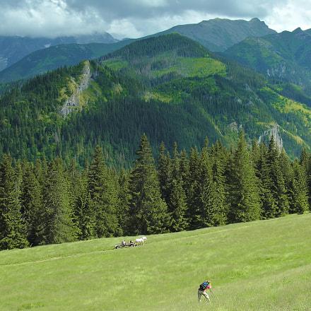 Landscape photographer at work, Nikon E8800