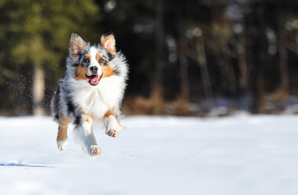 Photograph Flying dog II by Anne Geier on 500px