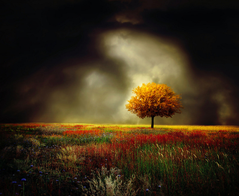 Photograph yellow tree by Barbara Florczyk on 500px
