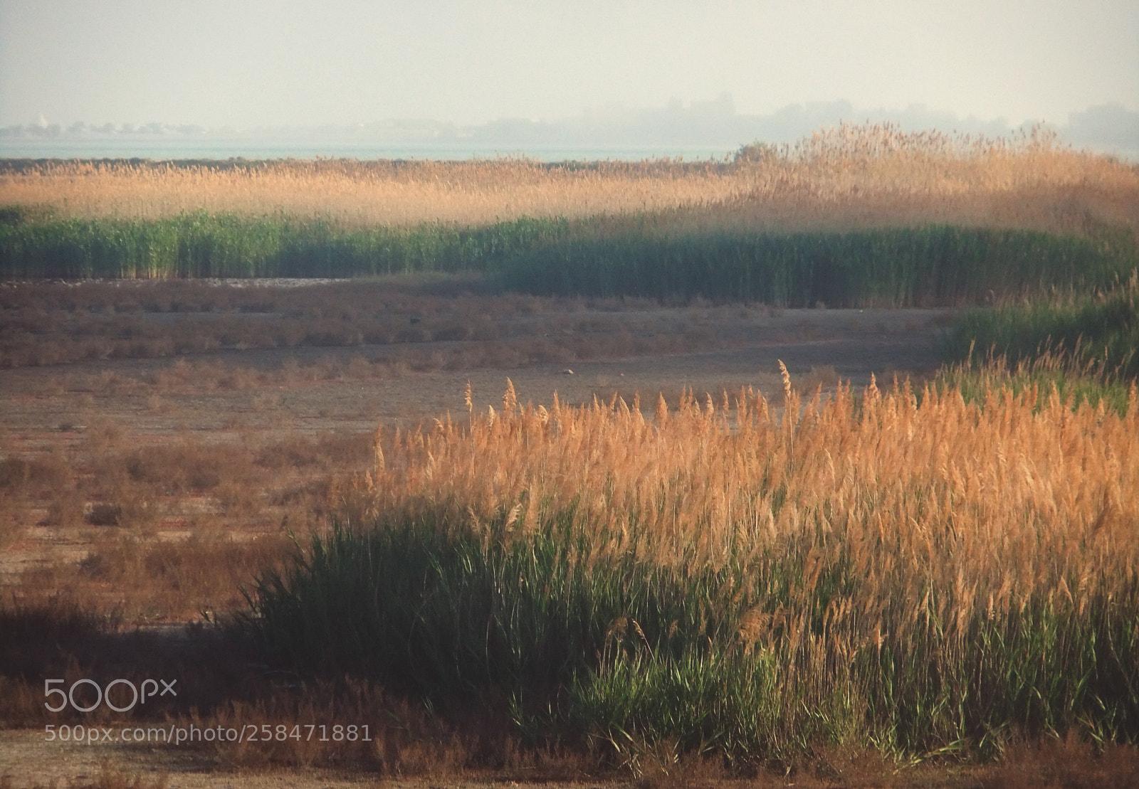 "FujiFilm FinePix JZ500 (FinePix JZ505) sample photo. ""Reeds."" photography"