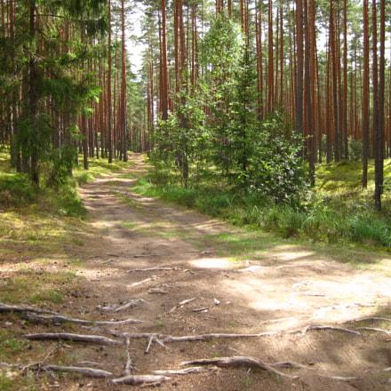 Walking in the woods, Canon POWERSHOT D10